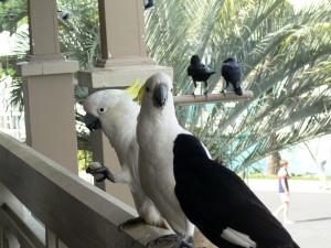 Ptaszki z Hamilton